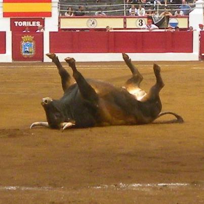touro invalido