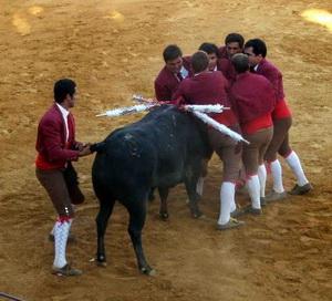 forcados pegam touro moribundo