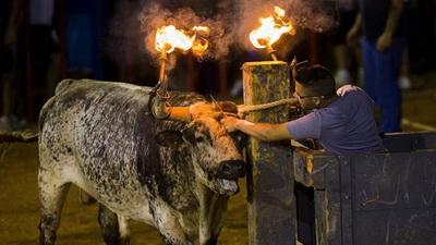 touro de fogo