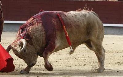 touro sangrando