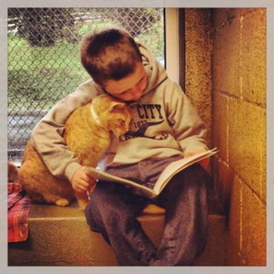 criancas leem para gatos abandonados
