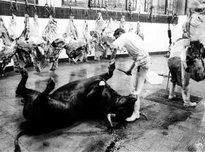 matadouro praca de touros
