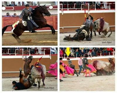 lea vicens cavalo corneado