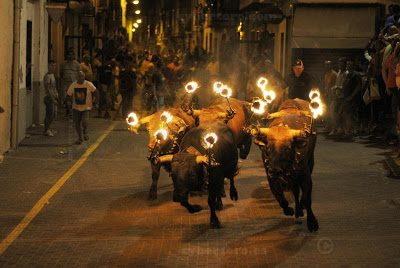 touros de fogo provincia de valencia