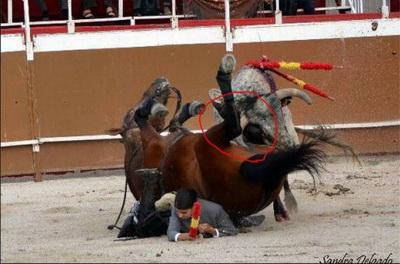 cavalo esventrado Lea Vicens