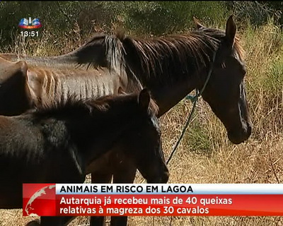 cavalos algarve