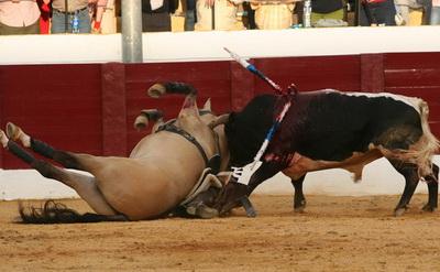 cavalo corneado