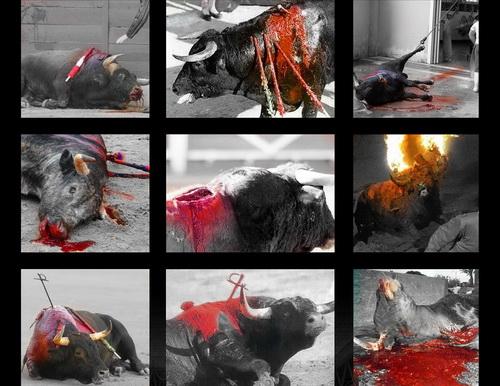 animais torturados e mortos por diversao