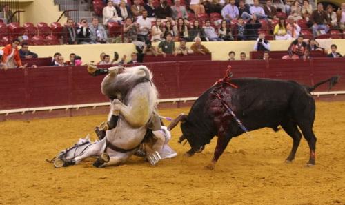cp tortura de animais