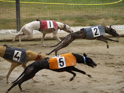 corridas de galgos