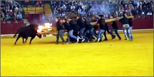 tourada ao forcao com touro de fogo