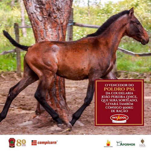 sorteio de cavalo em tourada
